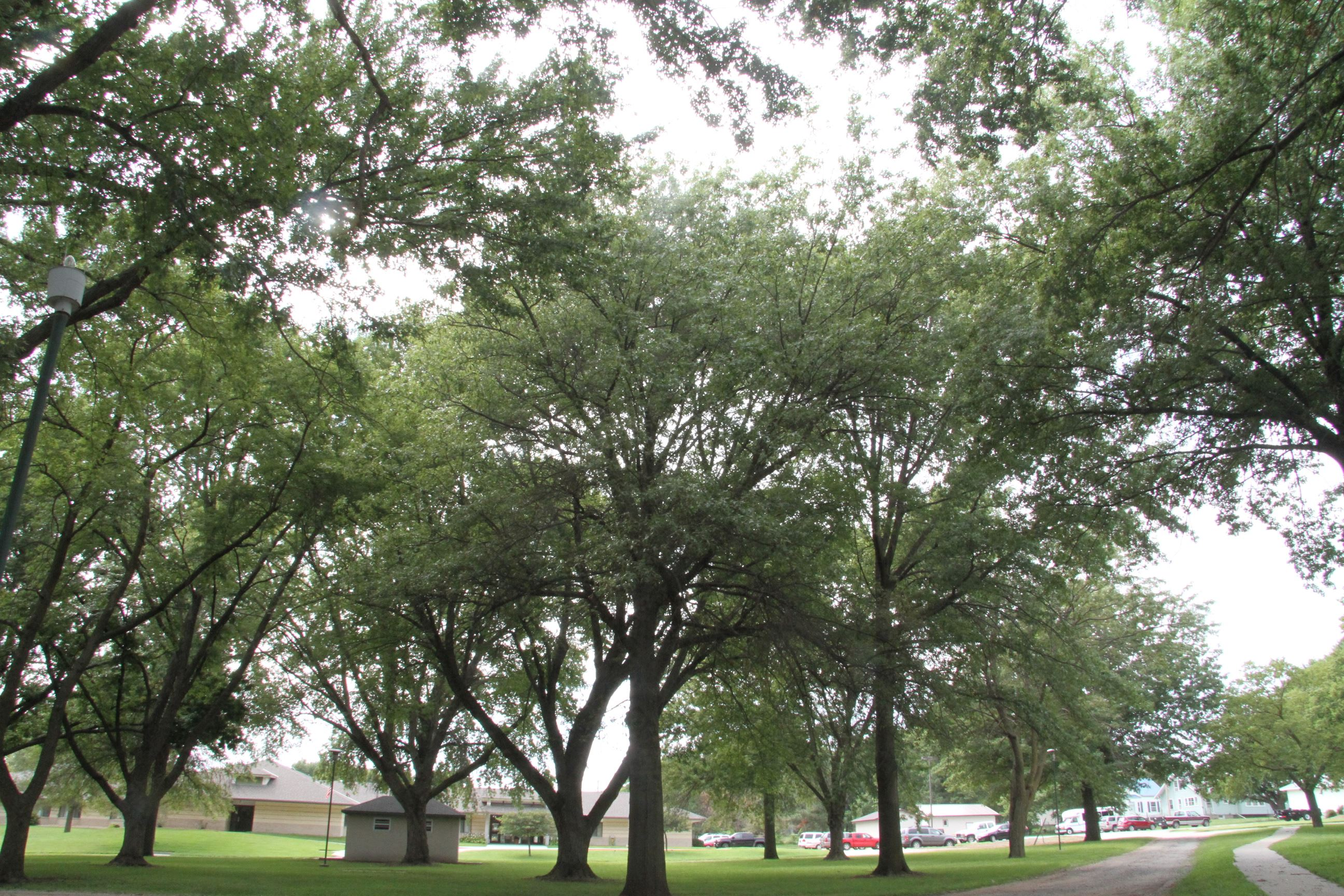 Trees in Willard Park