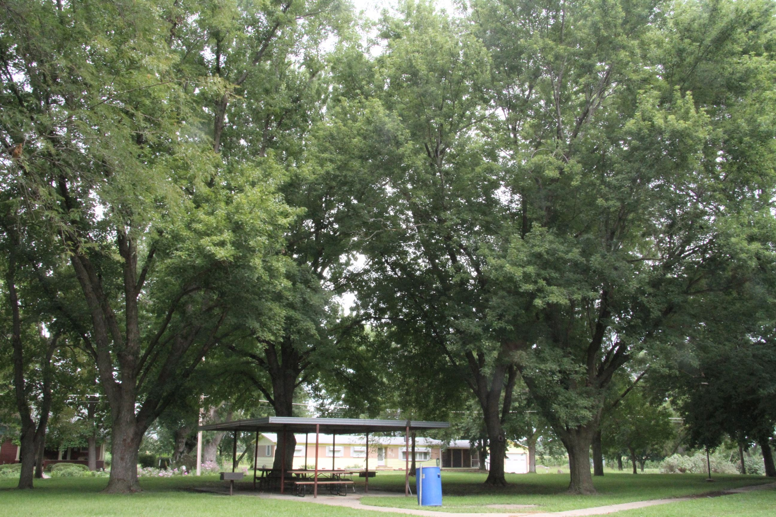 Picnic Shelter with Trees in Willard Park